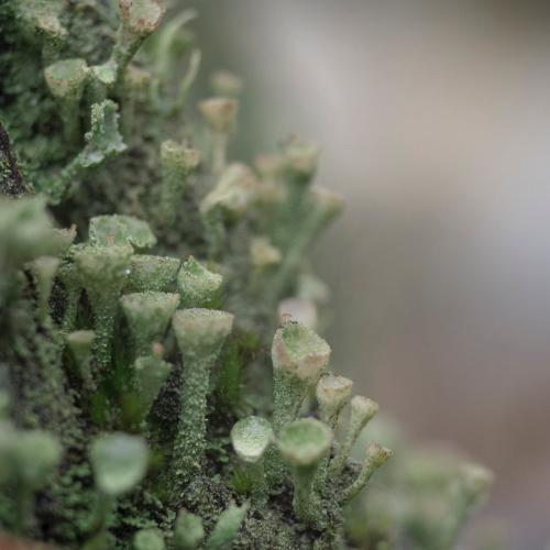 Little Nature 3