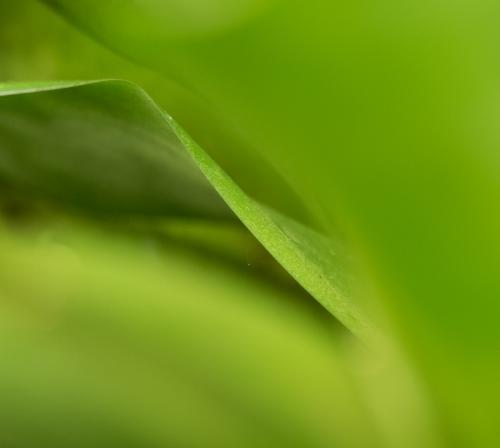 Groen 4