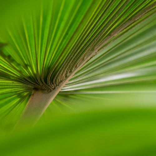 Groen 5