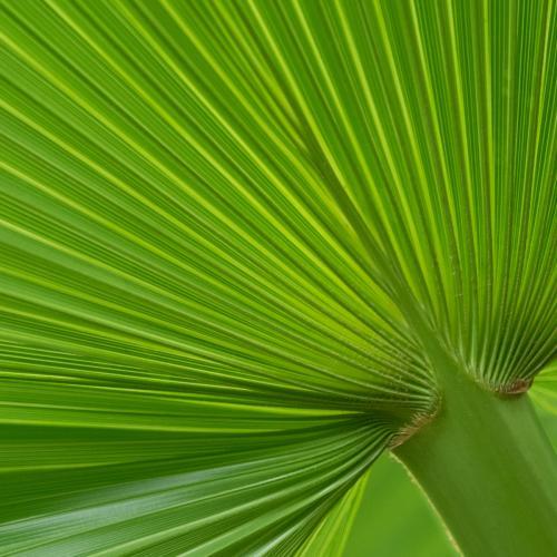Groen 2