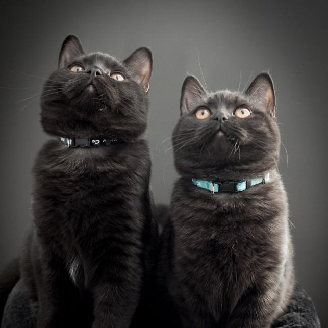 MIni & Cooper 5